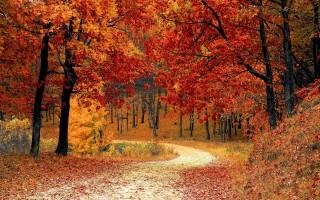 Herfstpakket